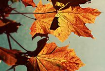 Autumn / Welcome to the board ' AUTUMN '. PLEASE add pins to the board related to this only.. Thanks.   / by Aparna