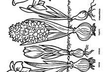jar+kvet