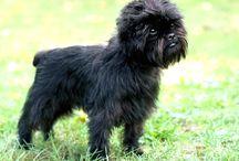 Alla världens hundraser - All Dog Breeds / En samling med foton på alla hundraser i världen.