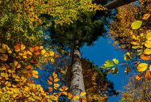 4 seasons destinations - Autumn / Where to catch the colors of nature, in the Autumn