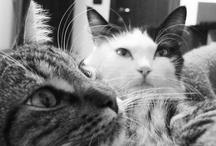 my cats by Massimo Mazzoni