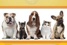 Alegra tu día con estas imágenes / Imágenes divertidas y tiernas para alegrar tu semana y regalar a quienes aman las mascotas
