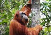 Bukit Lawang, Sumatra - Indonesia / www.bukitlawangtourtrekking.com whatsapp +6281364108007
