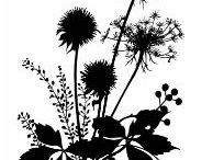 Silhouette Images / A collection of silhouette images for paper crafts / by Margo Horowitz