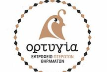 Κρεας / Η κτηνοτροφία στην Ελλάδα έχει μακροχρόνια παράδοση. Ιδιαίτερα η εκτροφή προβάτων και γιδιών είναι ένας κλάδος της πρωτογενούς παραγωγής με σημαντική συνεισφορά στην εθνική οικονομία.