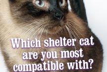 Meow You're Talking!