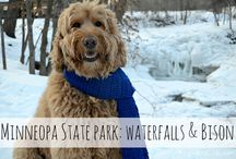 Minnesota Dog Friendly Places