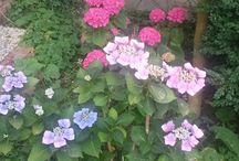 Planten en bloemen