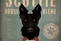 Scottie / by Steven Scott