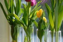 Plantas en vaso con agua