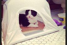 pelíšky pro kočku