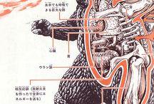 Anatomie / by Tyson Foster