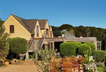 Mudbrick Vineyard / Images of Mudbrick Vineyard on Waiheke Island