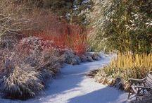 Giardini-d-inverno - piante e fiori invernali / Idee e foto del giardino in inverno