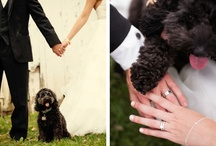 Casamento_PETs