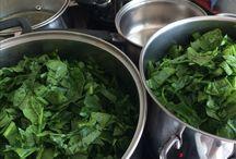 Egészség bio étel