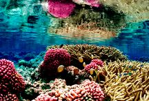 Awesome Pictures of Coral Reef / 25 awesome images of coral reef which is really beautiful. If you like any of the pictures of coral reef please live your comments.