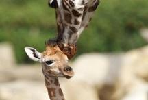 Animals.  / by Leesha Brugere
