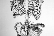 Fisheye - Expo Squelette