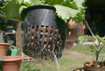 Ideas para el hogar cultivo hidroponicos