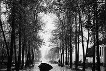 Love The Rain!