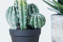 Trend | New Botanicals