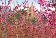 Tu mejor primavera / Compartimos vuestras mejores imágenes de la primavera en la Región de Murcia