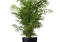 Växter Bällstahof
