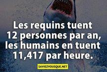 shark ~~^~~