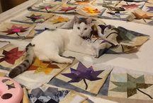 Quilting / My cat assistant .