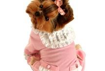 I want this dog! Please, babe.