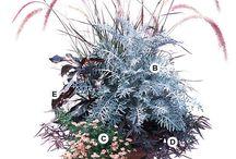 Garden it / by Jenine Lilly
