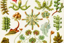 Bryophytes: mosses & liverworts