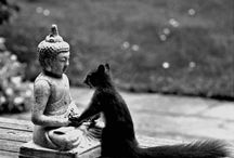 Zen / by Maureen Hagedorn