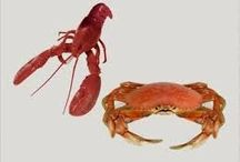 Food on Friday: Crayfish, Lobster and Crab / To add to this collection just head on over to http://caroleschatter.blogspot.co.nz/2015/01/food-on-friday-crayfish-lobster-crab.html Cheers