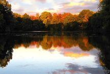 L'autunno è una seconda primavera in cui tutte le foglie sono fiori / Autunno, colori e profumi