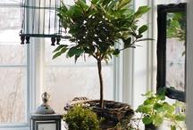 # Indoor Plants. # Para dentro de casa. / Plantas que são adaptáveis apparatus dentro de casa. / by Luci Busnardo 1
