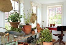 Lovely gardens and garden ideas