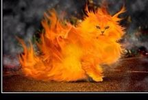 Warriors Cats / Fire Alone Cat Save Our Clan