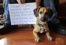 Dog shaming / by Ashley Short Sever