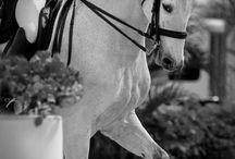 Horse Elegance