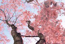 Trees / by Tina Johnson
