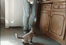 KITTY CATZ