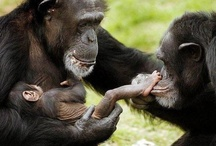 Animal Families / Animal families