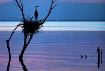 pace e tranquillità