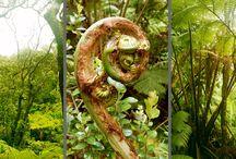 Hawai'i - Schamanismus und Feng Shui / Hawai'i - Leben im Einklang mit der Natur Schamanismus und Feng Shui