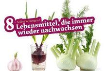Gemüse ziehen
