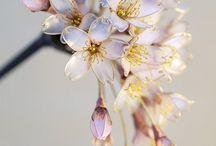 Kwiaty z lakieru