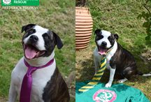Dogs Wearing Ties / We partnered with Epsom Canine Rescue to raise funds for unwanted and neglected dogs