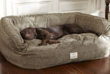 Beds for animals